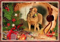 Joyeuses fêtes de Noël [ON EXPLORE]