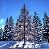 l'ultima nevicata - (600)
