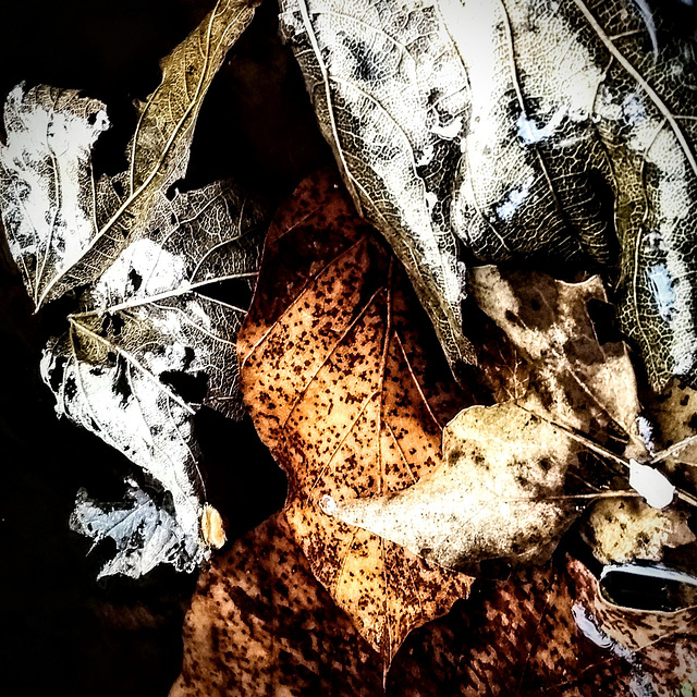 leaf and death
