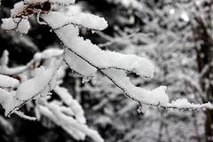 Winter in Oberschwaben