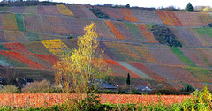 DE - Dernau - Vineyards in autumn