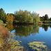 Autumn View of the Lake