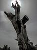 the tree of fear : Tikjda