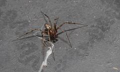SpiderDC IMG 7918