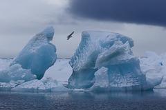 Iceberg : Archipel François-Joseph