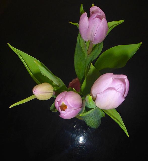 Gruß mit Tulpen - saluton per tulipoj