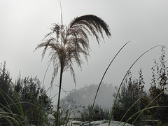 morgens Nebel ...