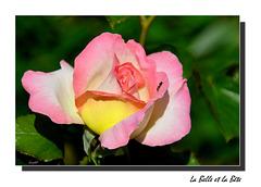 La Fourmi qui aimait les Roses ...