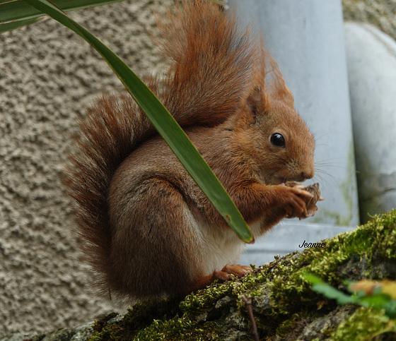 Un bonjour de mon petit écureuil