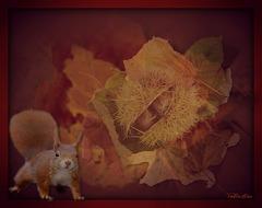 Hello ! c'est l'automne : ma saison préférée...