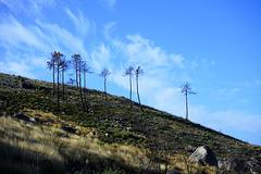 Serra da Estrela - III