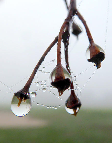 Wassertropfen und Wasserperlen an Spinnenfäden