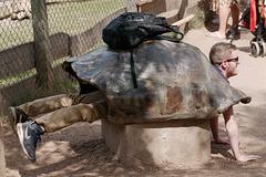 La tortue reprend vie, il ne manque que la salade
