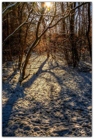 Winter Shadows - Wykeham Forest, North Yorkshire