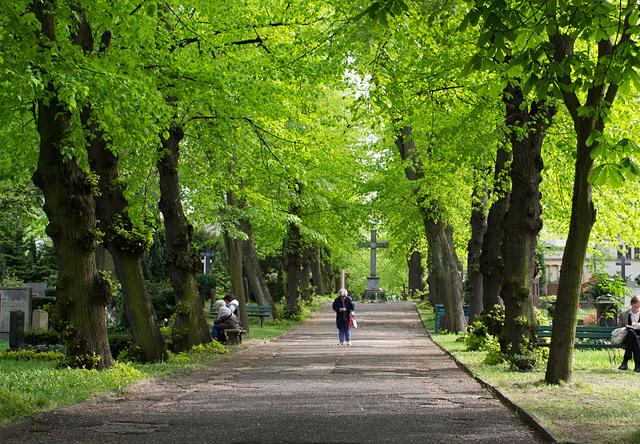 Berlin St Matthäus Kirchfriedhof (#0083)