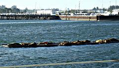 Sea lion platforms