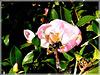 Aux jardins de la Ravillais à Ploubalay ou Beaussais sur Mer(22)