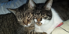 best friends: Beast and Prince are inseparables