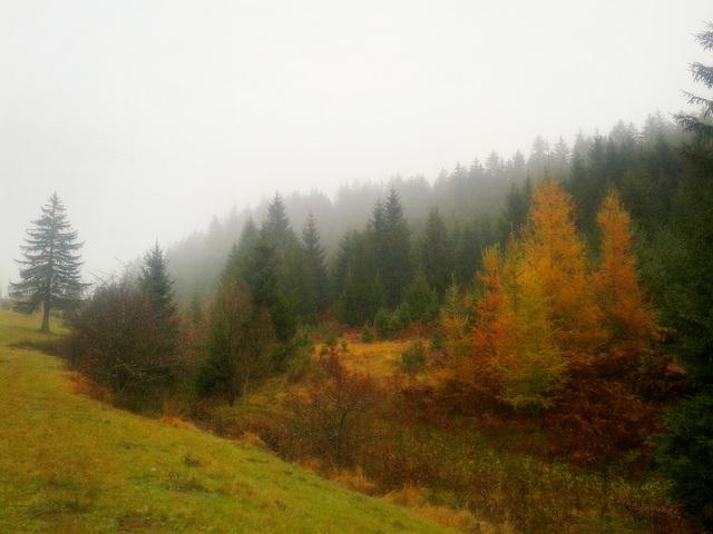 November autumn mood