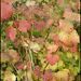 subtle autumn shades