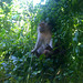 Koh Phak Bia monkey