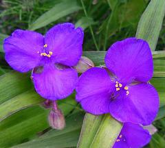Une touche de violet / A touch of purple