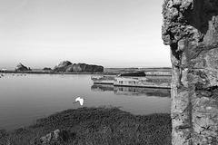 Egret Among the Ruins