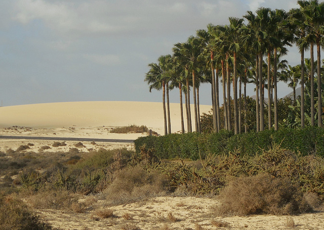 Fuerteventura: Palmen und Dünen