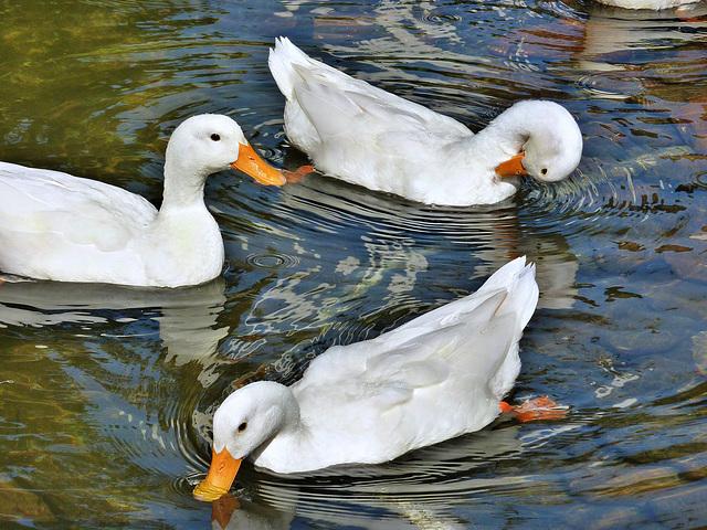 tre bellezze al bagno - (456)