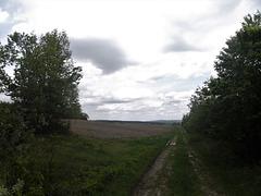 Sentier nuageux / Cloudy pathway