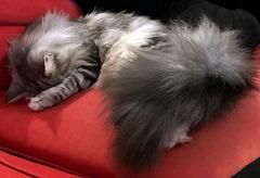 My Little Ballerina, Dame Judi Dench....sleeping again!