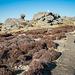 Gritstone weathered rocks .. at 538 metres.