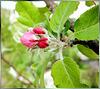 Apple blossoms... ©UdoSm