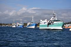 excurtion en mer d Iroise et île de molène