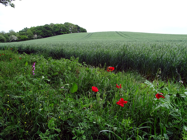 I see fields of green, red poppies too.  What a wonderful world.
