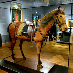 Rijksmuseum 2015 – Wexy, the horse of Prince William of Orange at the battle of Waterloo
