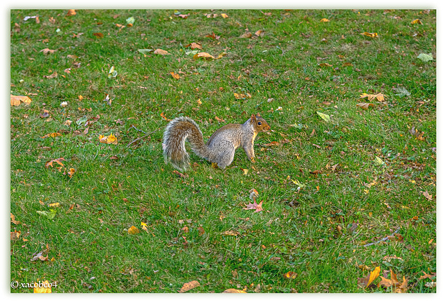 Perri- The Youth of a Squirrel in Central Park NYC