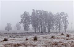 On a Frosty Morning....