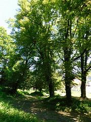 Promenade verdure