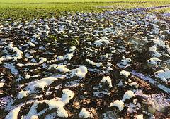 Winter Ade...!?!