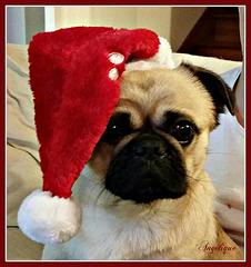 Karl vous souhaite une merveilleuse année 2015 avec un peu d'avance!