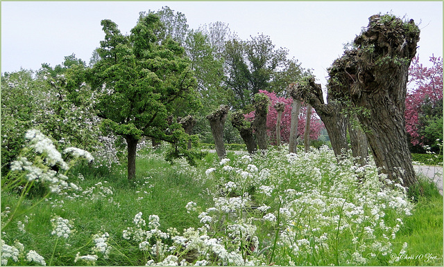 Overwhelming Spring Scenery...