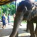 Krabi Elephant HOUSE Sanctuary