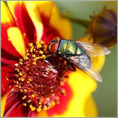 Voll der Pollen...