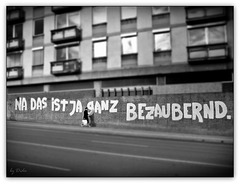Bezaubernder Zaun - Enchanting fence (◕‿-)