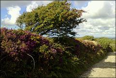 Lane on Carn Marth, Cornwall.