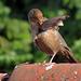 Vogel auf dem Dach
