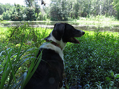 Garip by the pond