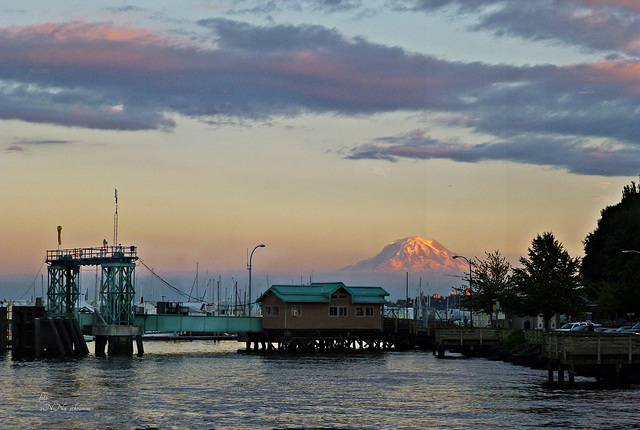 Tacoma Yacht-Hafen, Blick auf Mt. Rainier *