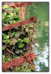 Rostgrün - Russet-Green